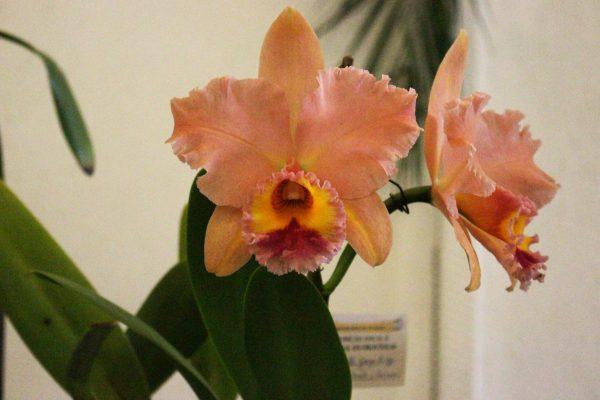 Lançamento do livro '70 Anos de Orquídeas' organizado pela Sociedade Bandeirante de Orquídeas